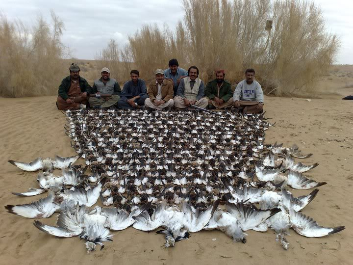 Saudi prince slaughters 2,100 nearly extinct birds – for thrills?