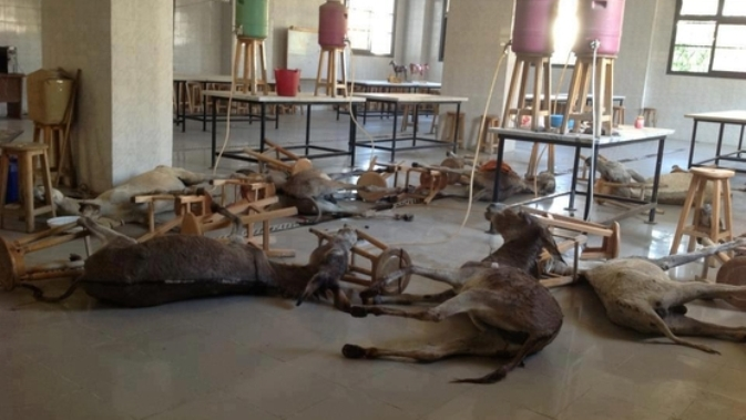 Egyptian vet school exposed for vicious cruelty to animals [graphic videos]