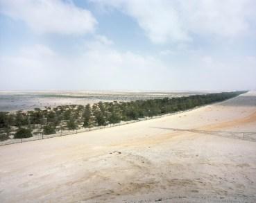 100 million trees dry, rather than green, the UAE's western desert