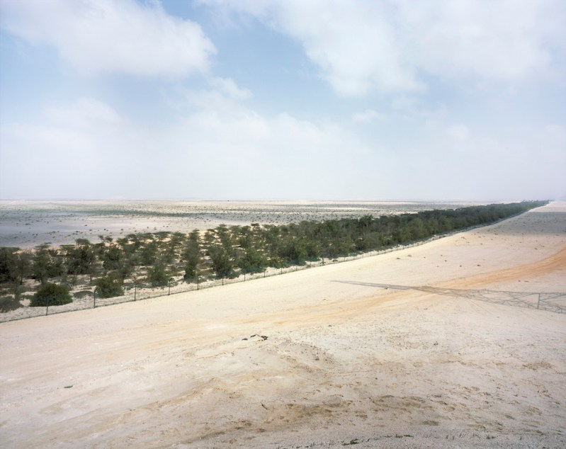 100 million trees dry, rather than green, the UAE's western desert