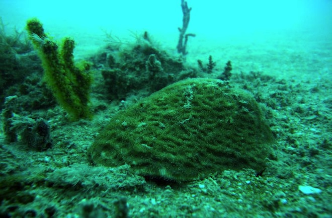 Iraq's first coral reef in cold, polluted water shocks scientists