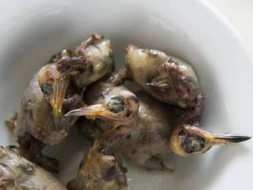 Cyprus kills 1.5 million migrating songbirds to eat in fetish dish
