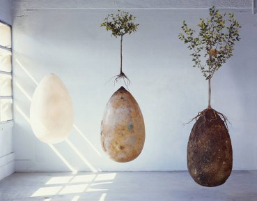 Organic burial pods grow live trees from dead people