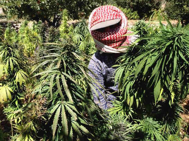 Watch ISIS militants take over and burn marijuana fields in Syria