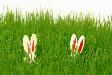 5 home eco gadgets brought by the Easter Bunny?