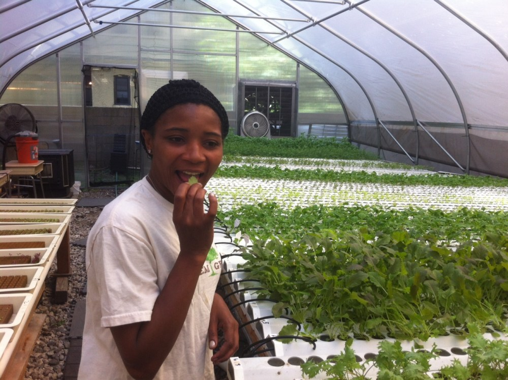 Harlem Grown grows greens and girls in New York City