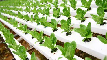 New Jersey kids doing hydroponics? forghedaboudit!