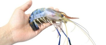 Enzootic makes male prawn fish farming a greener business