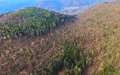 La natura del Trentino distrutta dal vento