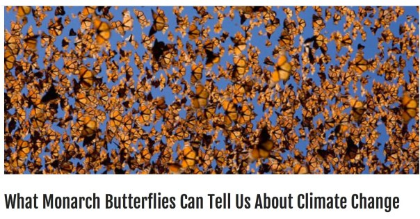 What Monarch Butterflies Can Tell Us About Climate Change