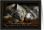 Pet Quotes About Pet Loss