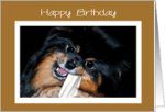1000 Images About Pomeranian Birthday On Pinterest
