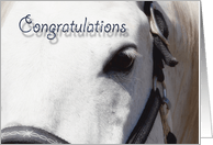Congratulations Cards with Horses from Greeting Card Universe