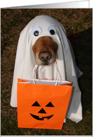 Halloween Cards with Animals or Pets from Greeting Card