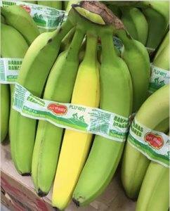 Quirky Banana
