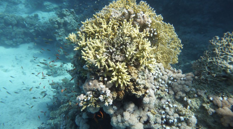 Ägypten: Traumhaft unterwasser, überwasser… naja