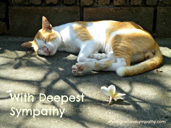 Beautiful Cat Loss Sympathy Cards - Photographic with Quotes