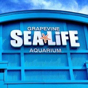 Sea Life Grapevine Aquarium New Claws Exhibit Giveaway!