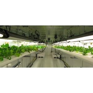 Pool Reasons Why Growers Should Consider Aquaponics Fusion Properties Vegetable Grow Setup