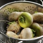 """Turnips """"Platte Witte"""""""