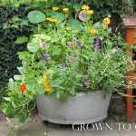Edible flowers grown in pot