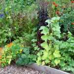 garden connect in august