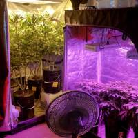 How to Set Up Grow Tents for Cannabis