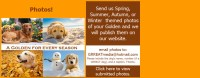 Image For Grreat Golden Retriever Rescue Education And