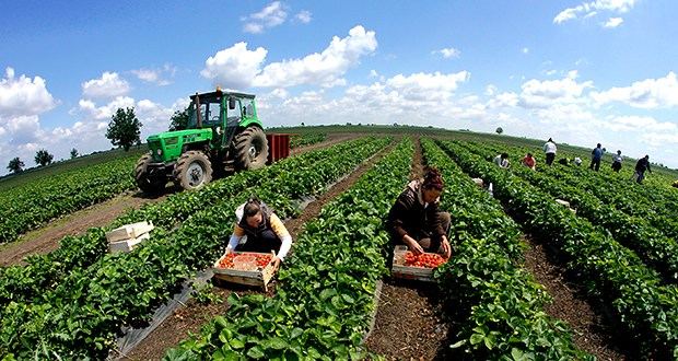 poljoprivreda-traktor-1252015