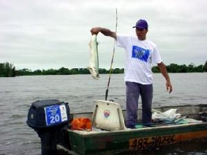 Aumenta cota para pesca e armazenagem de peixes em Mato Grosso