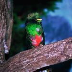 """El Origen del Quetzal """"La Leyenda de Kukul 2"""""""