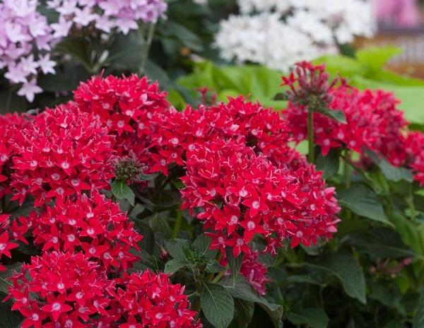 Piante Ricadenti Da Balcone Perenni : Magnifici fiori da coltivare in pieno sole guida giardino