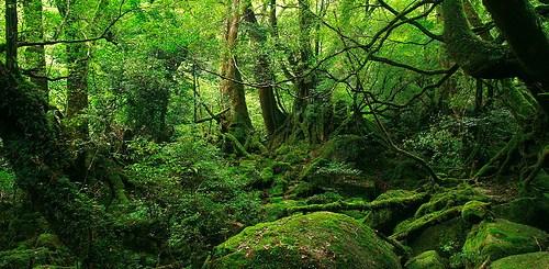 Brocelandia, el bosque encantado 1