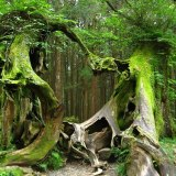 Hoh-forest