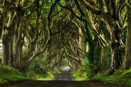Dark Hedges (Irlanda)