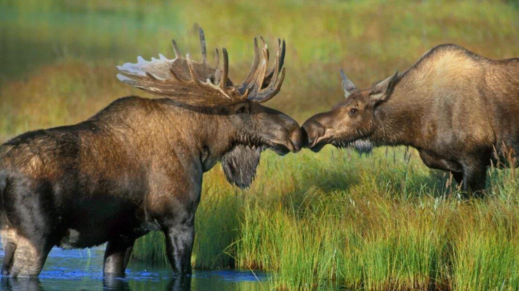 Fox Animal Wallpaper Amor Y Relaciones De Pareja Entre Animales Gu 237 A