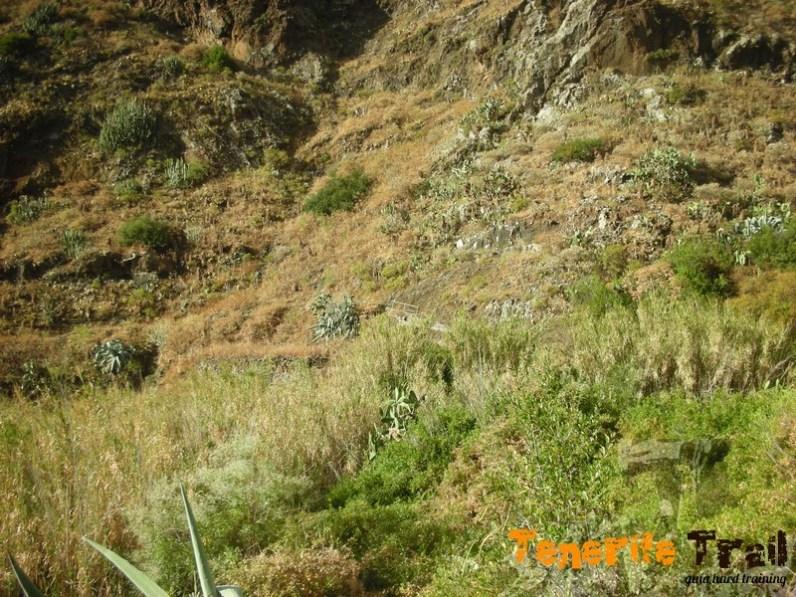 Detalle barandilla al fondo destino barranco de Igueste