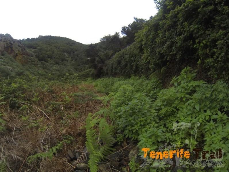 Detalle sendero con abundante vegetación se suele cerrar ojo