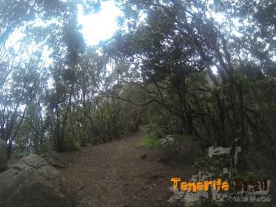Cuatro caminos pasando cruce de Chamorga