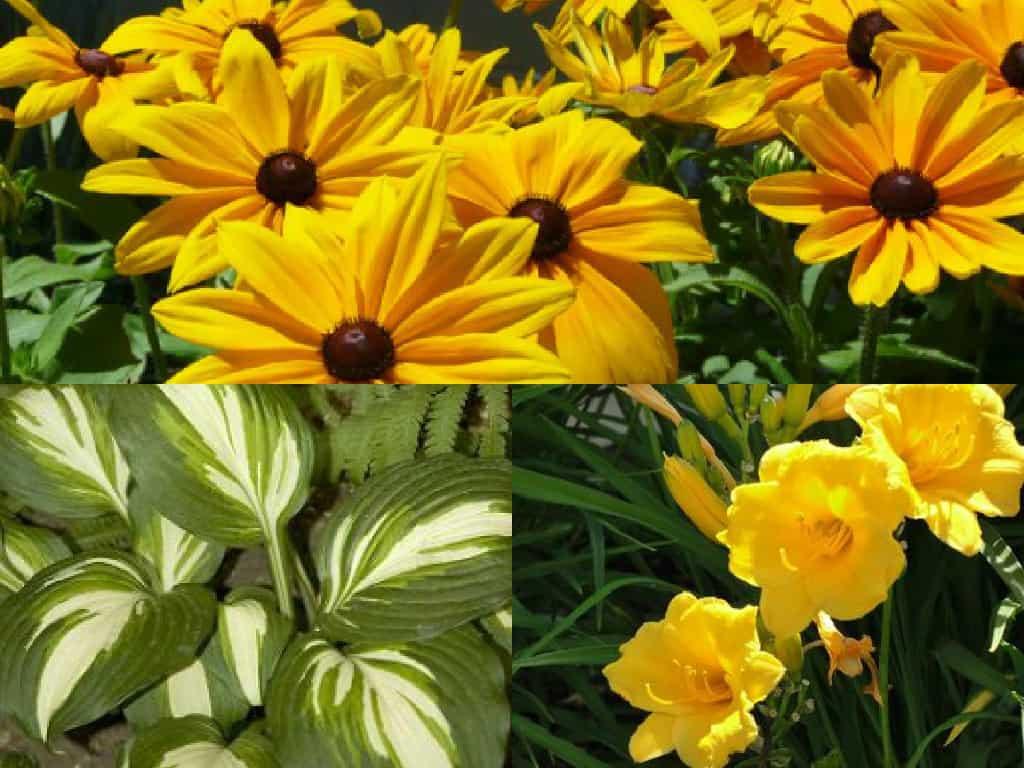 5 bellissime piante a bassa manutenzione