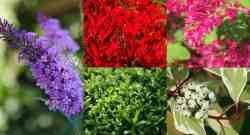 9 arbusti a crescita rapida