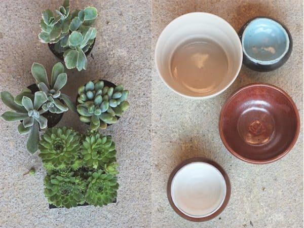 Come trapiantare le succulente