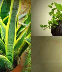 8 piante d'appartamento in grado di crescere bene anche in ambienti poco luminosi