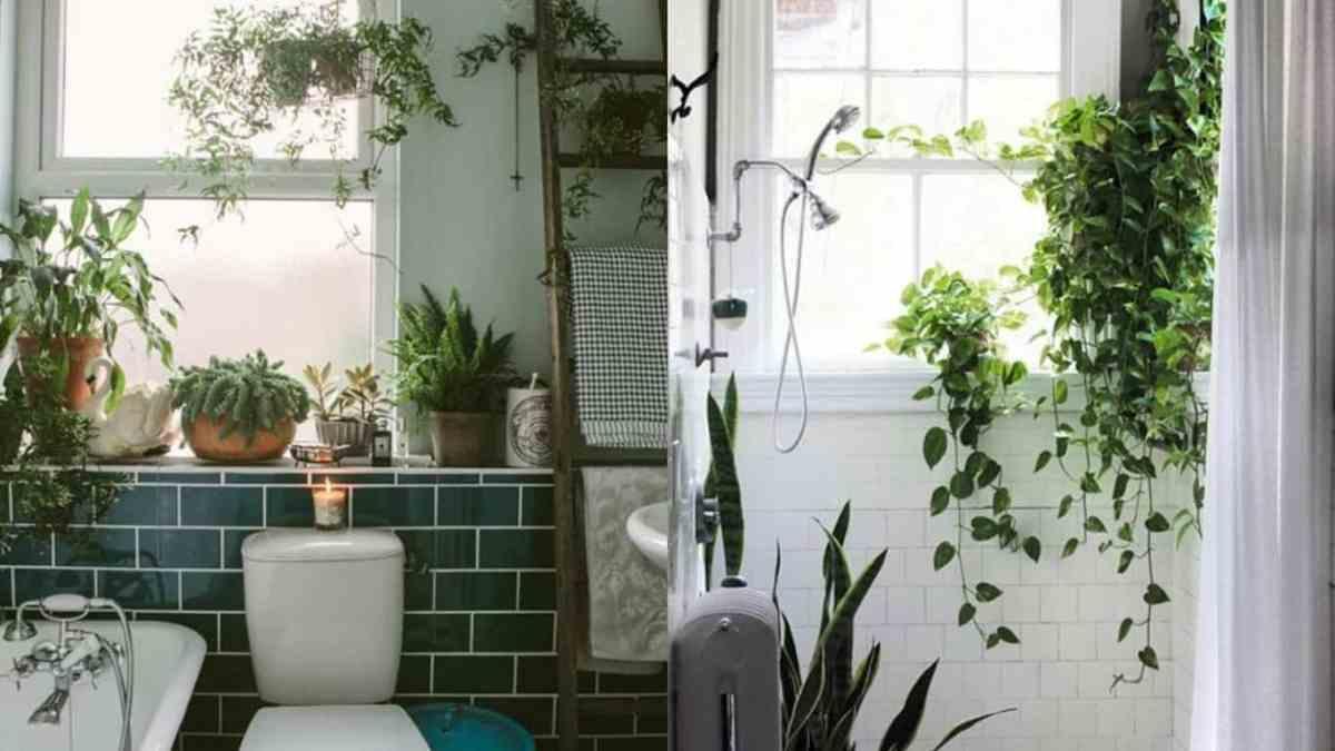 Decorare con le piante: quali coltivare in bagno?