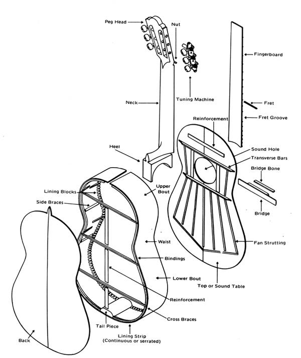 acoustic guitar anatomy