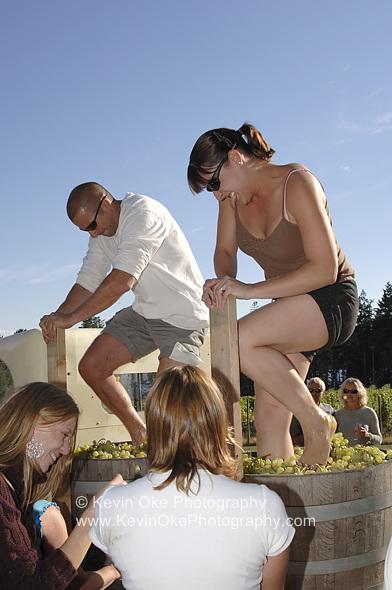 Making wine at the Saturna Island Family Estate Winery harvest celebration