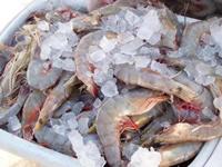 Gulf Shores Seafood Market Alabama