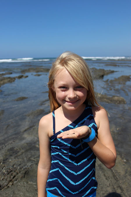 Hermit Crab Huntress
