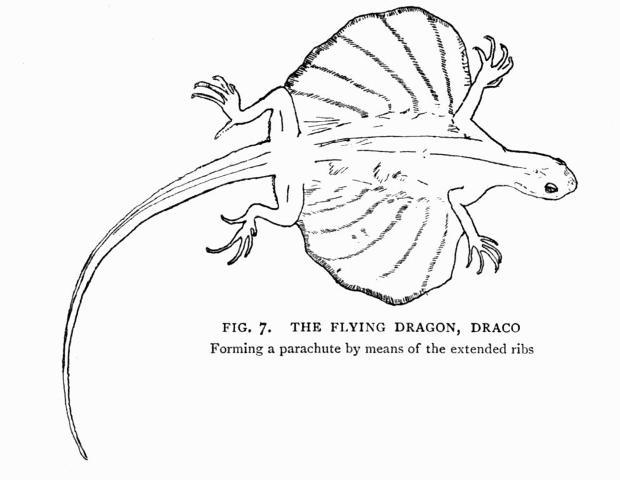 true draco diagram