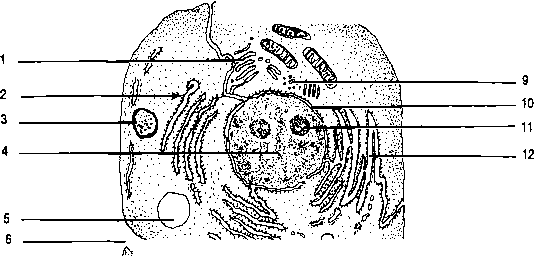 generalized cell diagram